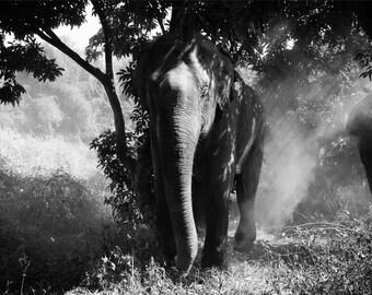 Thailand Elephant Photography Print - Black and White
