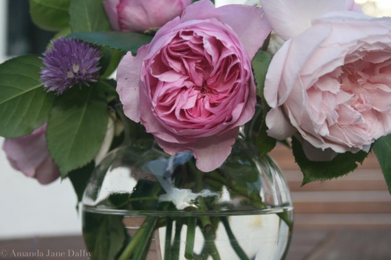 Shabby Chic Pink Roses Still Life Photography, Shabby Chic Photography ...