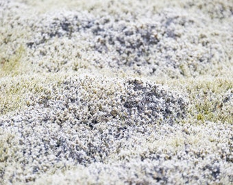 Photo Canvas Wall Art. Photograph of White Moss on a Lava Field in the South West of Iceland, printed on canvas.