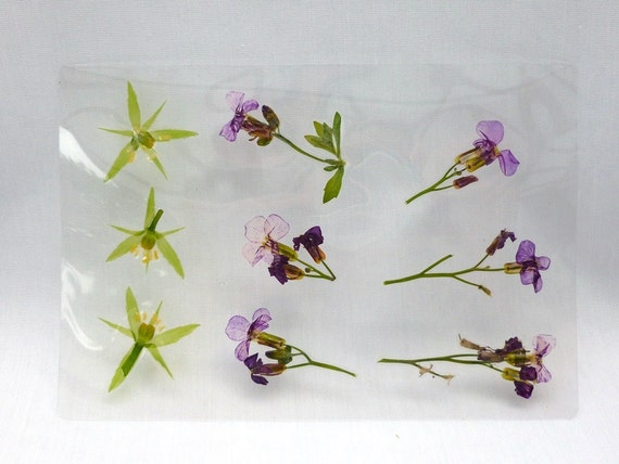Real pressed dried laminated flowers sheets crafts