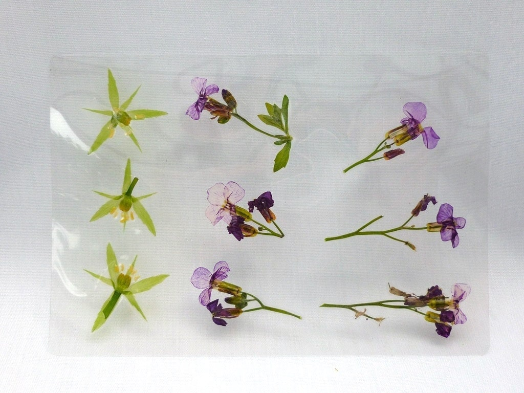 Real pressed dried laminated flowers 2 sheets crafts for Custom craft laminate sheets