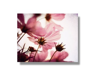 Pink cosmos flower canvas art, flower wall art, nature photo canvas, garden flower photography, shabby chic decor - Delicate Cosmos