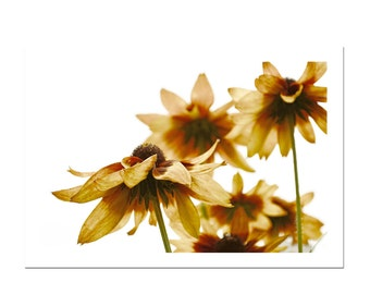 Flower Photography Rudbeckia Coneflower Yellow Orange Fall Botanical