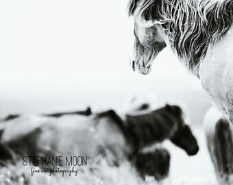 Wild Horse Photography, Shackleford Banks, Carrot Island, Banker Horse, Black and white Horse Photography, North Carolina Wild Horse,
