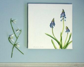 Botanical Canvas Print ' Grape Hyacinth '