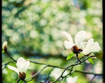 Magnolia en Fleurs - Fine Art Print - Nature Photography -TTV - Say It With Flowers - Etsy Wall Art - TFTeam