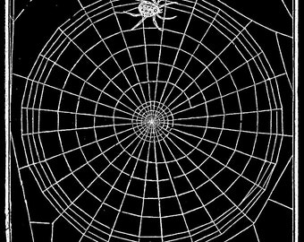 Vintage Papercut Collage - Spider Web - Elegant Gothic Art - Dramatic Black and White Art Print - Natural History Insect Art