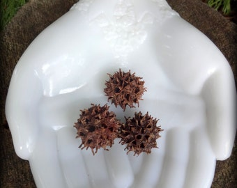 Wytch Burrs ~ Protection, Banish, Warding Off (while drawing in positive energies)