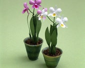 Cattleya Orchid Paper Flower Kit  for 1/12th scale Dollhouses, Florists and Miniature Gardens