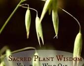 Sacred Plant Wisdom vol. 7:  Avena/Wild Oats