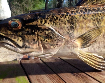 "Walleye sculpture 40"" chainsaw art wooden freshwater fish carving rustic wall mount home art sport fishing lake art home or office decor"