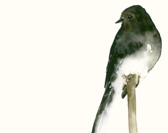 Black Phoebe Fine Art Print from Original Watercolor