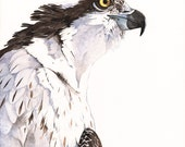 Osprey Watercolor painting Bird art  Print of watercolor 5 by 7 size wall art print - bird art print