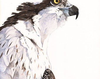 Osprey Watercolor painting Bird art  Print of watercolor 5 by 7 size wall art print - bird art print