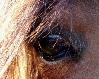 Horses Eye And Forelock Picture Card