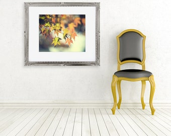 nature photograph autumn leaves fall color fine art photography golden yellow orange green tree