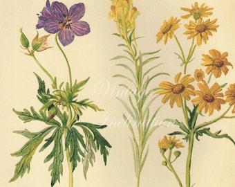 Antique Print, English Flowers Butterflies, Edwardian chart beautiful wall art vintage color lithograph illustration 1970 butterfly garden