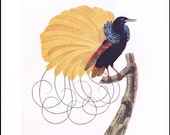 """Unique Bird Art Print, Yellow Bird of Paradise, Vintage Tropical Wall Art, Exotic Home Decor """"Nebuleux Showing Its Finery"""" No. 69"""