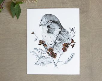Peregrine Falcon Print 8x10