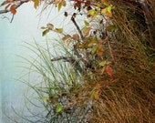 FALL GRASSES along LAKE, nature photography print