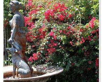 Romantic Garden Fountain and Bougainvillea Photograph - New Orleans