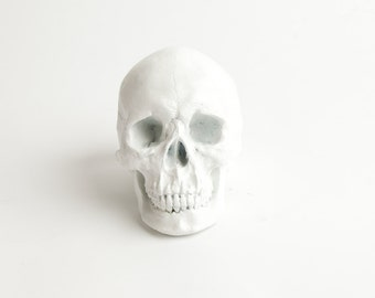 The X-LARGE Wiloughby - Extra Large White Faux Human Head - Resin Skeleton - Sugar Skull Like