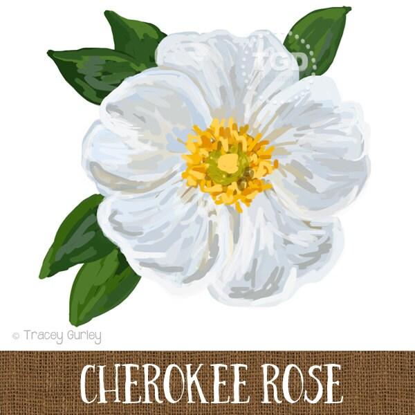 Cherokee rose original art cherokee rose clip art georgia for Cherokee rose