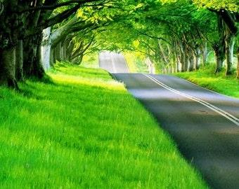 Grassy Green Road Photography Backdrop