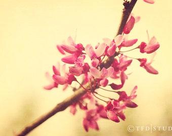 Nature Photography - Macro - Redbud Blooms - Fine Art