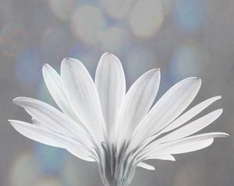 White daisy with delicate bokeh background