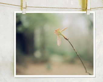 Learning to Fly - botanical, fine art photography, film photography