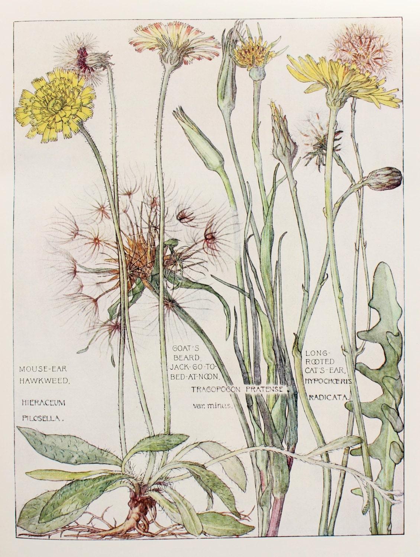 28 Vintage Botanical Wallpaper Botanical Print