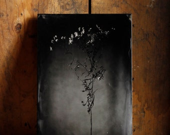 5x7 Modern Tintype Photographic Plate.  Ferrotype. Dried Flowers. Minimal