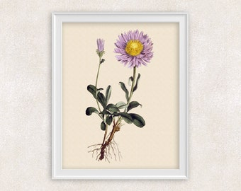 Aster Botanical Print - Purple Flower Art - Wall Art Prints - 8x10 PRINT - Home Decor - Botanical Art Print - Gifts For Her - Item #141