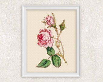 Rose Bud Botanical Art Print - 8x10 PRINT Pink Flower Print - Garden Prints - Illustration - Poster - Victorian Art - Item #163
