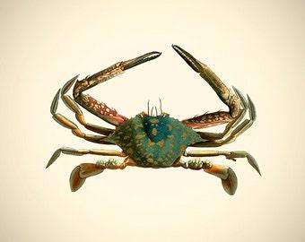 Crab 5 Fine Art Print
