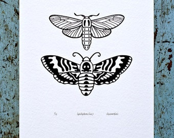 Moths / Lepidoptera 'specimen' (noir) - Limited edition one-colour screenprint