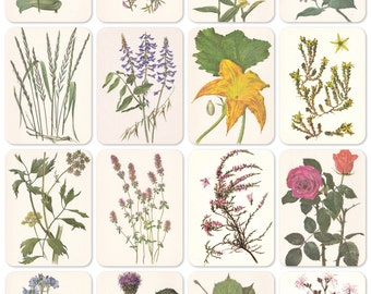 Plants, Bestiary. Set of 16 Vintage 8''x6'' Prints -- 1980. Fine Arts, Moscow