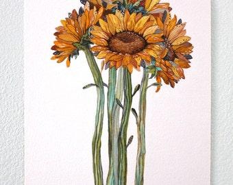 Sunflower Watercolor Painting, Floral Art Print, Botanical Garden, Giclee Art Print, Archival Art Print - Sunflower Bundle