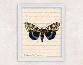 Blue Moth Print - Underwing Moth - Vintage Wall Art - Home Decor - Office Art - 8x10 - Item #107