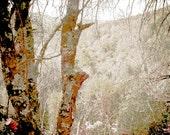 Nature Print , Landscape Photography, Tree Print, Grey Decor, Brown Fine Art, Misty Morning Hike by Paula DiLeo_110113