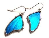 Blue Morpho Butterfly Wing Earrings - Real Butterfly Jewelry