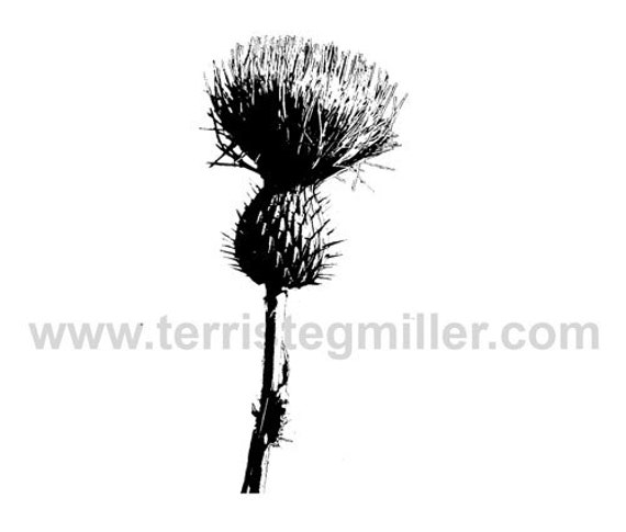 Thermofax Screen - Thistle