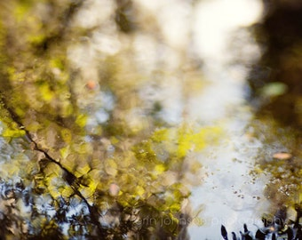 abstract landscape photography, green home decor, tree photograph, leaves, water reflection, nature photography, Okefenokee swamp