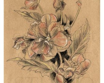 Original charcoal Drawing on Kraft paper, Pastels on Paper, flowers, rustic Kraft Floral II
