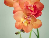 Flower Photography, Floral Wall Art, Freesia Flower Photo, Modern Wall Decor, Fine Art Photography Print, Floral Decor