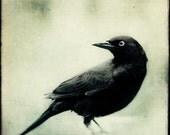 Large Photograph, Crow Art, Raven Print, Gothic Art, Halloween Decor, Large Wall Art, Black Bird, Fine Art Photograph, Large Print