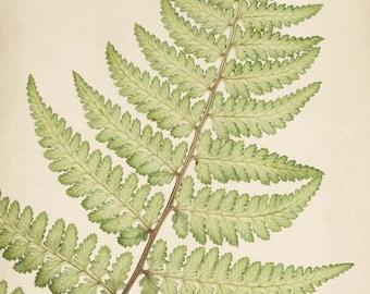 Botanical Art, Rustic Decor, Fern Print, Woodland, Forest, Nature Photography, Botanical Print, Wall Art, Fine Art Print, Nature Art