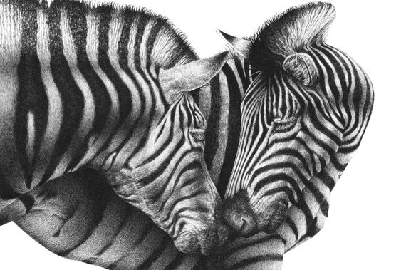 """5x7"""" Open Edition Giclee Print of Zebras"""
