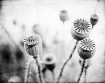 Black and White Photography Print, Grey Wall Art, Poppy Pods, Gray Decor, Botanical Art Print, Gray Pods, 8x10 11x14 20x24 print